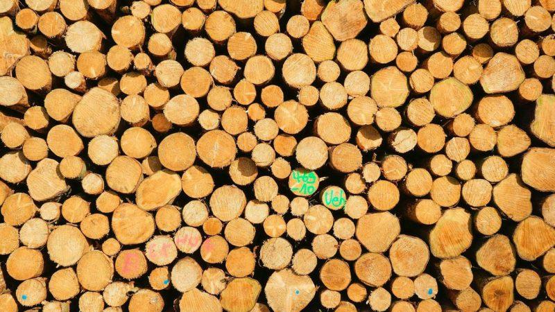 Tartak – jakie drewno znajdziemy na miejscu?