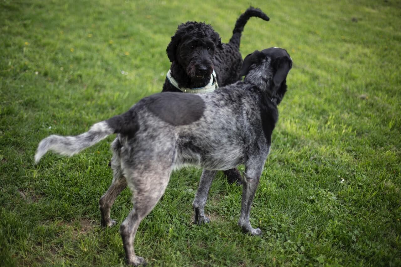 Gryzaki naturalne dla psów, jak je podawać i wybierać?